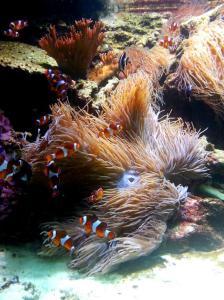 Vancouver Aquarium - Nemo & Dory