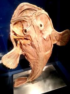 Vancouver Aquarium - Sea Monsters